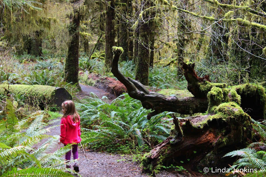My daughter walking through the Hall of Mosses in the Hoh Rain Forest, Olympic National Park.